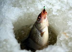 Лухская рыбалка