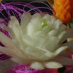 луковый цветок