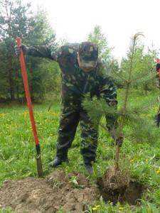 дню посадки леса