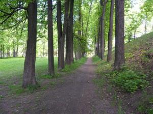Старый парк - липовая аллея