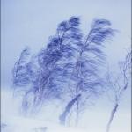 сильный ветер снег