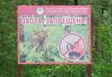 запрет охоты на кабанов